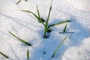 Natur im Winter mit Schnee-eingeschränkte Futtermöglichkeiten für Vögel