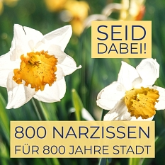 Zum Stadtjubiläum können Bürger*innen Marburg zum Blühen bringen. Die Stadt stellt Pakete mit je 800 Blumenzwiebeln bereit.©Grafik: Preisler/Foto: sole-d-allessandro/unsplash